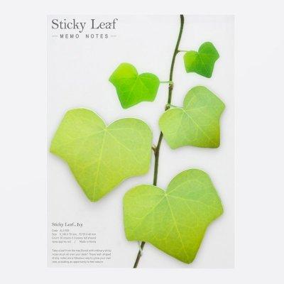 Sticky Leaf Ivy